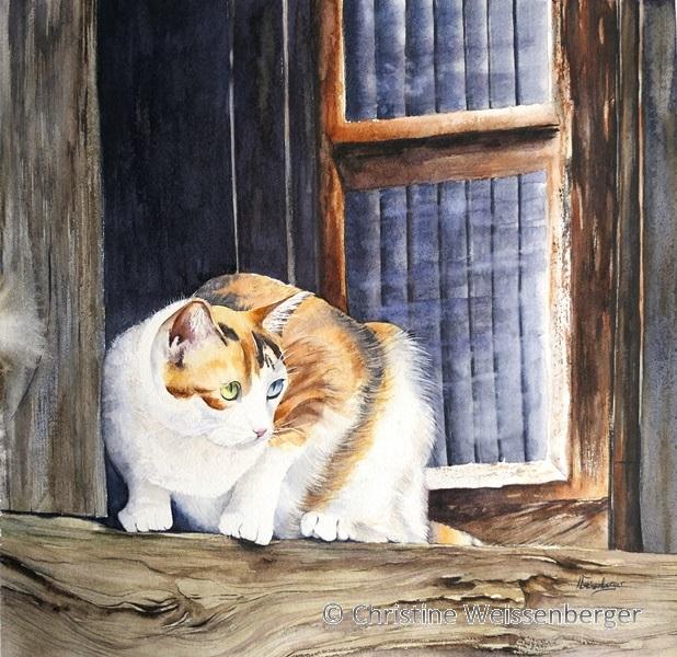 chat en veille