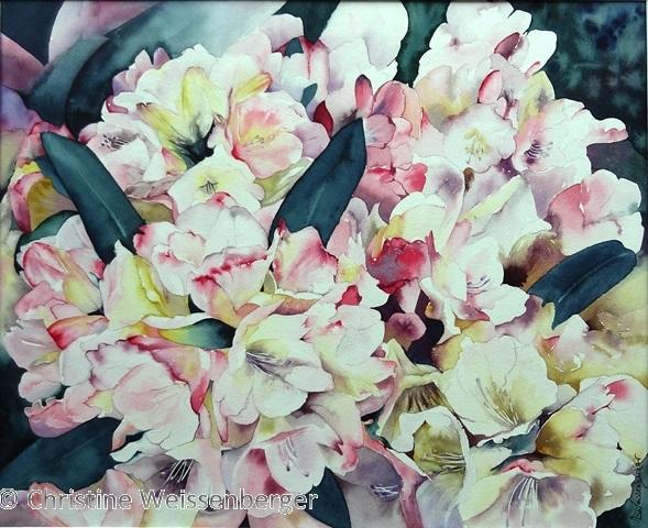 brassée de rhododendrons